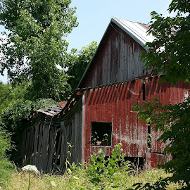 Red Barn by Gwen Paton - Buildings & Architecture Decaying & Abandoned ( red, barn, virginia, decay, abandoned )