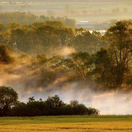 Misty Morning by Milan Hořejší - Landscapes Sunsets & Sunrises ( sunset, forest, landscape, morning, misty )