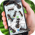 Ants on screen funny joke APK for Kindle Fire