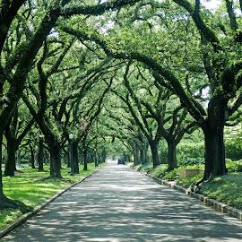 Tough Commute by Don Bates - City,  Street & Park  Street Scenes ( urban, green, houston, trees, shade )