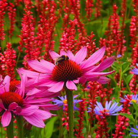by Eleanor McCabe - Flowers Flowers in the Wild