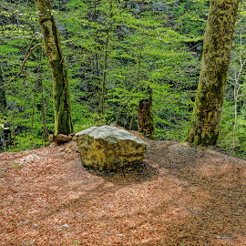 by Nikola Ikić - Nature Up Close Rock & Stone