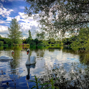 Mouldon Country park by Derek Robinson - Landscapes Waterscapes ( mouldon country park swindon swans water )