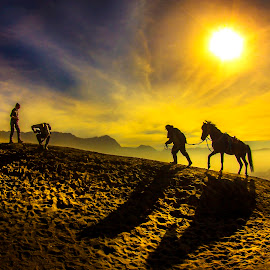 Shdow Of Horse by Muhammad Yoserizal - Animals Horses