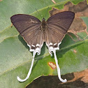 Common Imperial