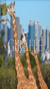 Giraffe Wallpaper HD Complete - screenshot