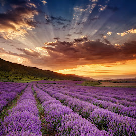 Lavender dawn by Evgeni Ivanov - Landscapes Prairies, Meadows & Fields ( plant, hills, ray, mountain, tranquil scene, dramatic sky, landscape, plantation, sun, distance, sky, nature, vibrant color, sunbeam, flower, bulgaria, aromatherapy, in a row, purple, grass, green, twilight, agriculture, cloudscape, lavender oil, sunlight, lavender, landscaped, dusk, field, dawn, background, outdoors, moody sky, cultivated, cloud, summer, rural scene, sunrise, scented )