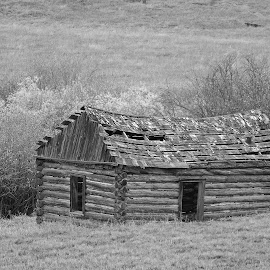 Abandoned Cabin by James Oviatt - Black & White Buildings & Architecture