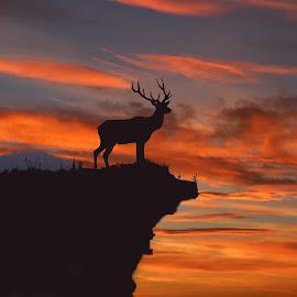 CLIFF HANGER by Julia Van Klinken Myers - Digital Art Animals ( animals, cliffs, nature, sunset, elk, digital photography )