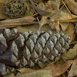 Nature's Collection by Thomas Vasas - Nature Up Close Other Natural Objects ( abstract, nature, pine straw, pine cones, leaves )