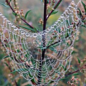 Beads of cobwebs by Dasa Augustinova - Uncategorized All Uncategorized