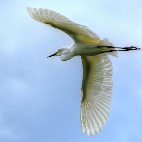 Bangau 3 by Aan Unchu - Animals Birds