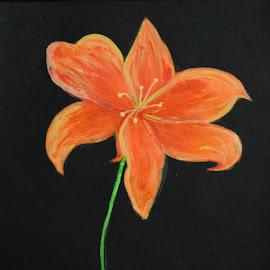 single flower by Rahul Manoj - Novices Only Flowers & Plants ( orange, green, yellow, black, flower )