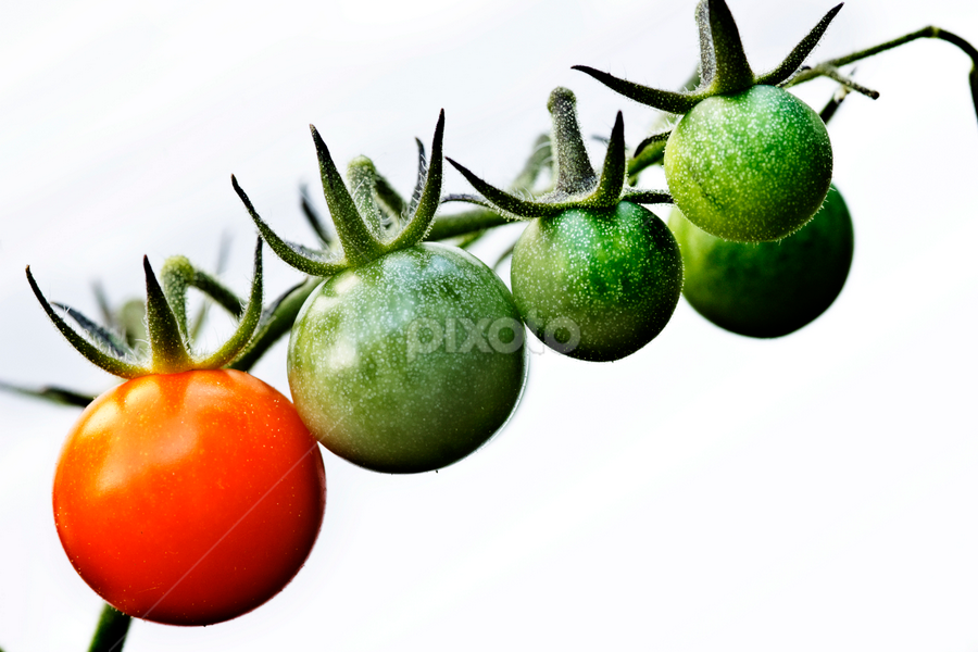 Tomatoes on the vine by Olga Charny - Nature Up Close Gardens & Produce ( pwcvegetablegarden, tomatoes )
