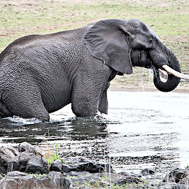 Water testing by Pieter J de Villiers - Animals Other