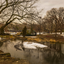 Central Park by Joseph Law - City,  Street & Park  City Parks ( melting, bushes, snow, reflections, trees, new york, first day, central park )