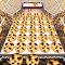 Cookie Dozer code de triche astuce gratuit hack
