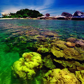 terumbu  karang by Anif Putramijaya - Landscapes Waterscapes