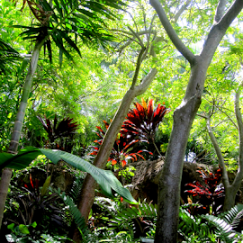 Tropical Vegetation by Jane Spencer - Nature Up Close Trees & Bushes ( bushes, tropical, trees, fronds, vegetation, ferns, palms )