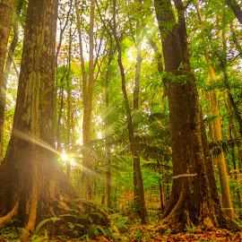 Save the Forest Trees Please by Gilbert Sanchez - Landscapes Forests ( forests, ray, sun set, sunrises, sun rise, forest, solar, sunlight, sun rays, sun, rays, canopy, tree, sunny, sunset, sunsets, sundown, forest floor, sunrays, trees, ray of light, sunshine, sunrise, cutting trees, renewal, green, nature, natural, scenic, relaxing, meditation, the mood factory, mood, emotions, jade, revive, inspirational, earthly )