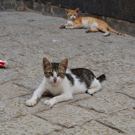Kittens in city of Fes - Marrocos by Patricia Vale - Animals - Cats Kittens ( cat, kittens, animal )
