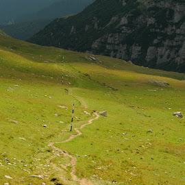 *** by Adriana Petcu - Landscapes Travel ( mountain, green, nature, romania, landscape )