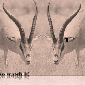 pan African antelopes on dilemma by Jayita Mallik - Typography Captioned Photos ( grass, fighting, antelopes, facing each other, africa )