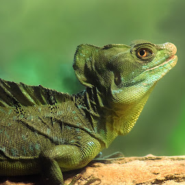 Green Lizard Thingy by Shawn Thomas - Animals Reptiles