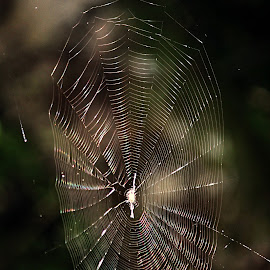 in the way by Roolien de Bruyn - Nature Up Close Webs