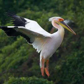 by Mohan Babu - Animals Birds