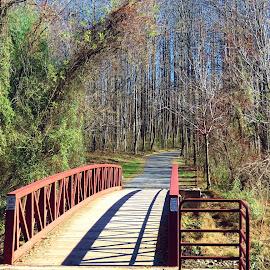 Centennial Park boardwalk and trail by Mary Gallo - City,  Street & Park  City Parks ( trail, nature, boardwalk, park, landscape,  )