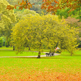 The bench is staring at me. by Grant Goeieman - City,  Street & Park  City Parks ( greens, seasonal, park benches, bench, colorful, green leaf, colorfull, united kingdom, colour, england, colourful, nature, autumn, greenery, bath, park bench, nature photography, colored, autumn colors, autumnal, park, autumn leaves, green leaves, green, colors, autumn colours, colours, park scene, season, color, natural )