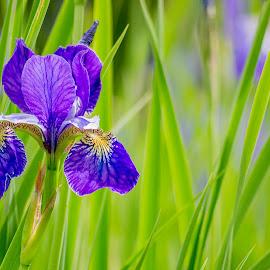 by Kristine Dokane - Flowers Single Flower