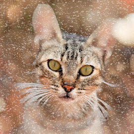 frozen and drizzled by Jose Luis Mendez Fernandez - Animals - Cats Portraits ( cat, feline, kitty, portrait, animal )