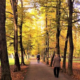 walk by Marija Čaušić - City,  Street & Park  City Parks ( fall, yellow )