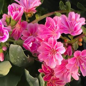 Flowers in the garden by Alesanko Rodriguez - Flowers Flower Gardens ( spring, flowers, beauty, botanical, nature, plant, florals, season, garden, summer )