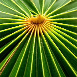 by TATYANA NAGEL - Nature Up Close Other plants ( green, nature up close, beauty, symmetry, leaf )