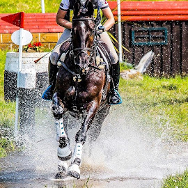 Cross Country Reflections  by Gordon Bain - Animals Horses ( water, reflections, cross country, scotsburn equestrian. )