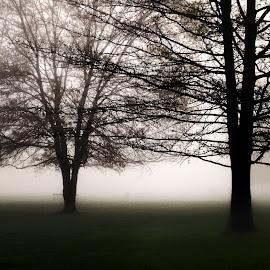 by Jan Blackburn - Nature Up Close Trees & Bushes