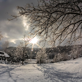 Winter fairytale by Rombe Kasňa - Landscapes Weather ( winter, tree, trees, house, scenery, landscape, shadows, sun rays )