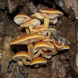 After Rain by Mārīte Ramša - Nature Up Close Mushrooms & Fungi (  )