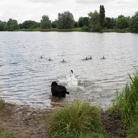 Chasing the birds by Jade Kellaway - Animals - Dogs Playing