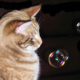 bubbles by Sue Rickhuss - Animals - Cats Playing