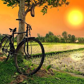 Bike Farm by Alit  Apriyana - Transportation Bicycles