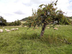 Photo 1 / 2 - Derelict Trad-Orchard Oxtenton Village, Gloucestershire