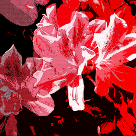 Pink on Red by Edward Gold - Digital Art Abstract ( digital photography, pink flowers, flowers, red flowers, abstract, digital art,  )