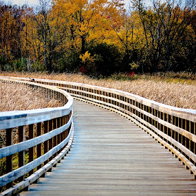 Walkway In A Field by Joe Boyle - Landscapes Prairies, Meadows & Fields ( field, wheat, wooden, wood, grassy, walkway, bridge )