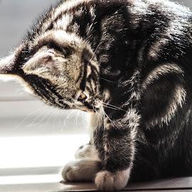 by Mariska Visagie - Animals - Cats Kittens