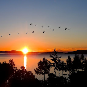 Early Birds by Campbell McCubbin - Landscapes Sunsets & Sunrises ( islands, ocean, sunrise, canada geese, geese, birds,  )