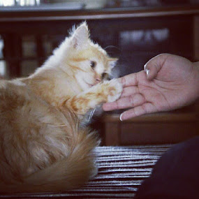 Handshake as sign of #friendship #photoshoox #cat by Shoox De LightPainter - Instagram & Mobile Instagram